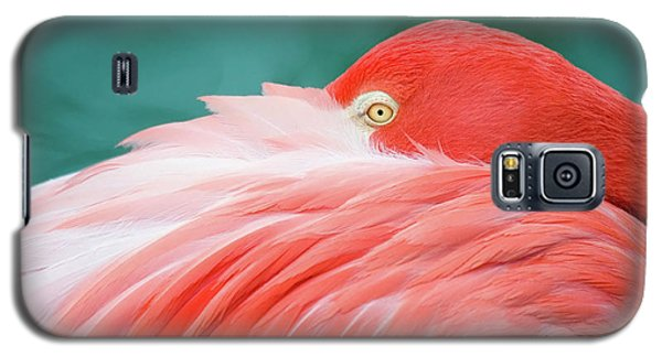 Flamingo At Rest Galaxy S5 Case