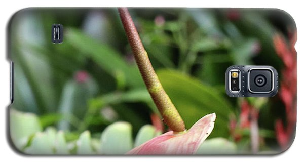 Flamingo Flower - Anthurium Andreanum Galaxy S5 Case