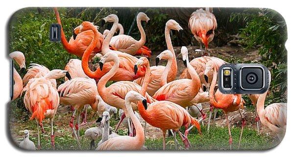 Flamingos Outdoors Galaxy S5 Case