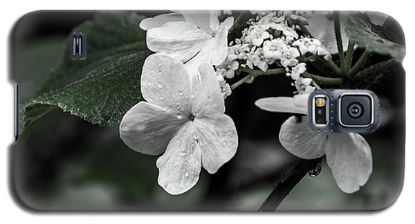 Flower And Rain Drops  8645 Galaxy S5 Case