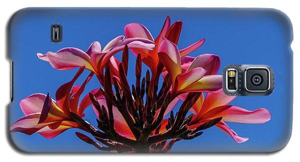 Flowers In Clear Blue Sky Galaxy S5 Case