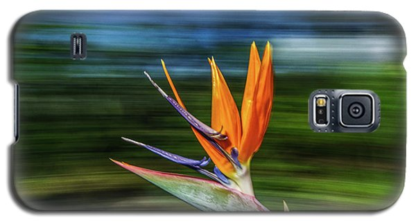 Flying Bird Of Paradise Galaxy S5 Case