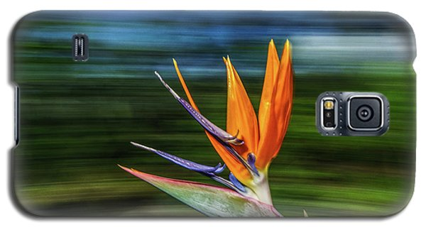 Flying Bird Of Paradise Galaxy S5 Case