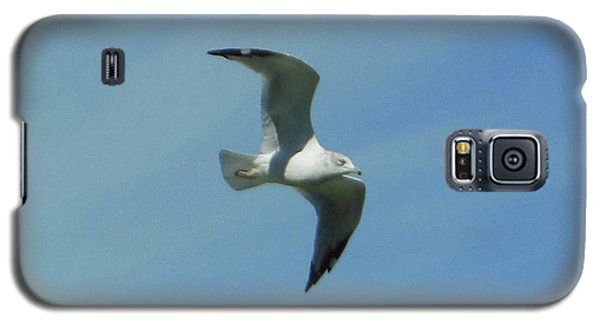 Galaxy S5 Case featuring the photograph Flying Seagull by Rockin Docks