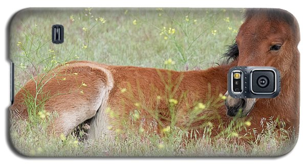 Foal In The Flowers Galaxy S5 Case