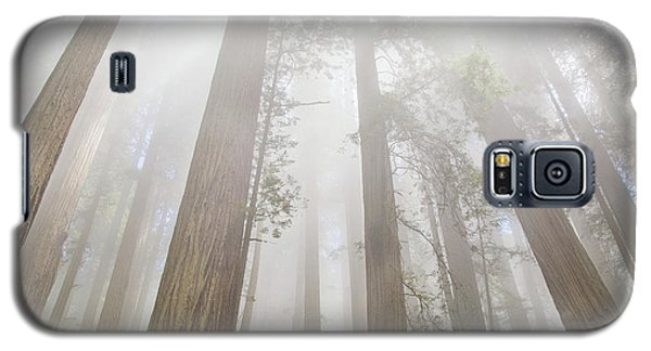 Fog In The Redwoods Galaxy S5 Case
