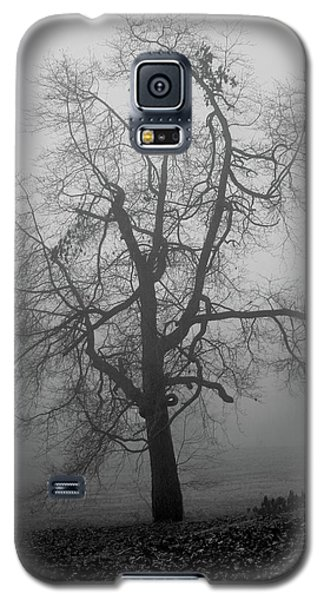 Foggy Tree In Black And White Galaxy S5 Case