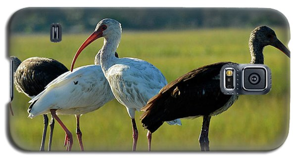 Four Ibises In A Row Galaxy S5 Case