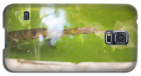 Freshwater Crocodile Galaxy S5 Case