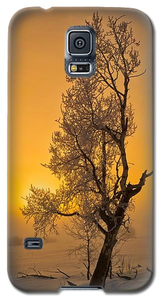 Frosted Tree Galaxy S5 Case