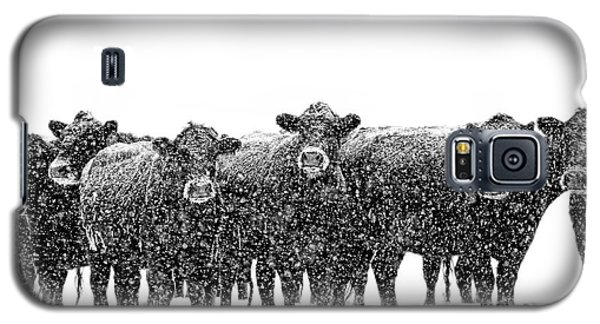 Frosty Faces Black Angus Cows Montana Galaxy S5 Case