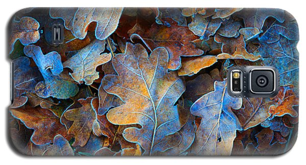 Icy Galaxy S5 Case - Frozen Oak Leafs - Abstract Natural by Pavel klimenko