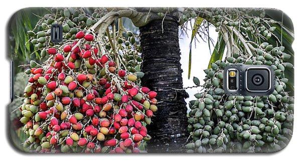 Fruity Palm Tree  Galaxy S5 Case