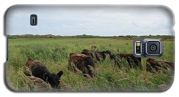 Galloway Cows On Texel North Holland Galaxy S5 Case