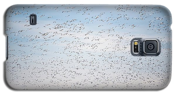 Geese In The Flyway Galaxy S5 Case