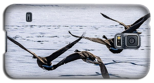 Geese Over Frozen Kitring Pond Galaxy S5 Case