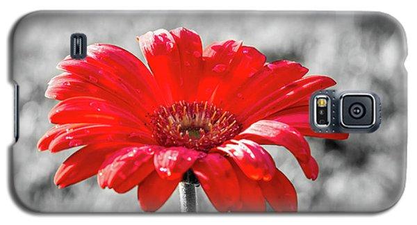 Gerbera Daisy Color Splash Galaxy S5 Case