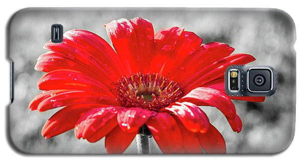 Gerbera Daisy Color Splash Galaxy S5 Case