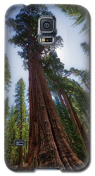 Giant Sequoia Tree Galaxy S5 Case