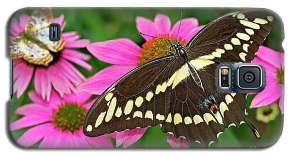 Giant Swallowtail Papilo Cresphontes Galaxy S5 Case