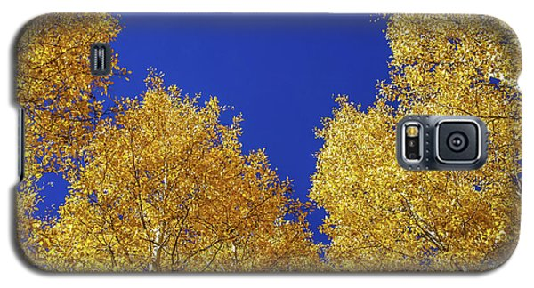 Golden Aspens And Blue Skies Galaxy S5 Case