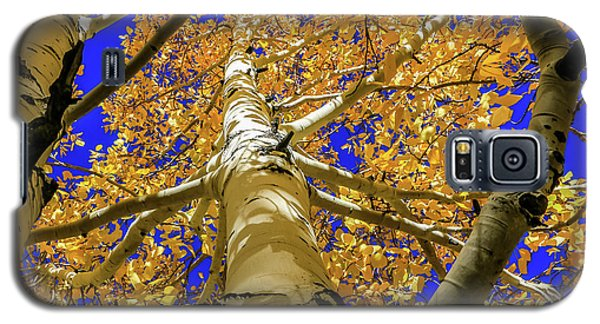 Golden Aspens In Grand Canyon Galaxy S5 Case