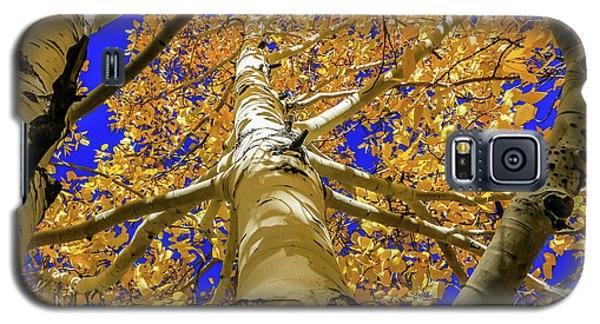 Golden Aspens In Grand Canyon Galaxy S5 Case