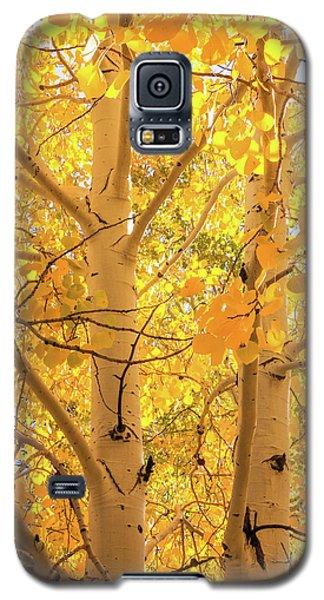 Golden Aspens In Grand Canyon, Vertical Galaxy S5 Case