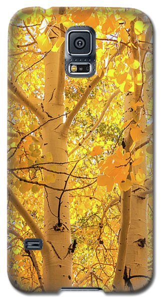 Golden Aspens In Grand Canyon, Vertical Galaxy S5 Case