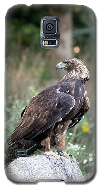 Golden Eagle On Rock 92515 Galaxy S5 Case