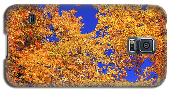 Golden Oaks Galaxy S5 Case