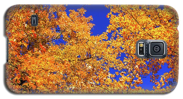 Golden Oaks Galaxy S5 Case