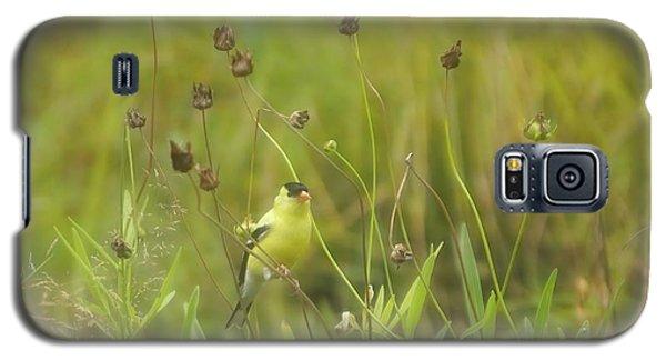 Goldfinch In Summer Galaxy S5 Case