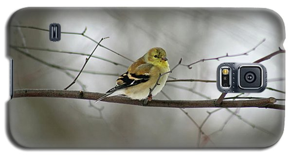 Goldfinch In Winter Looking At You Galaxy S5 Case