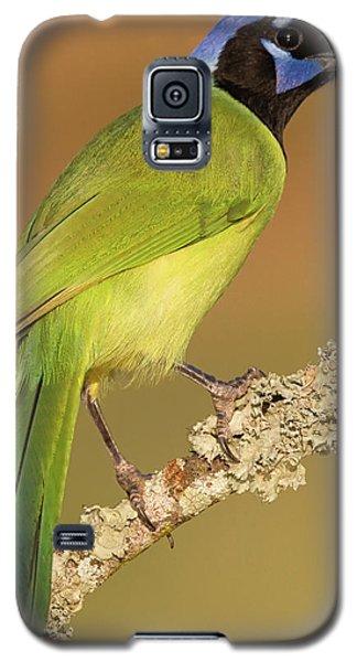 Gorgeous Green Jay Galaxy S5 Case