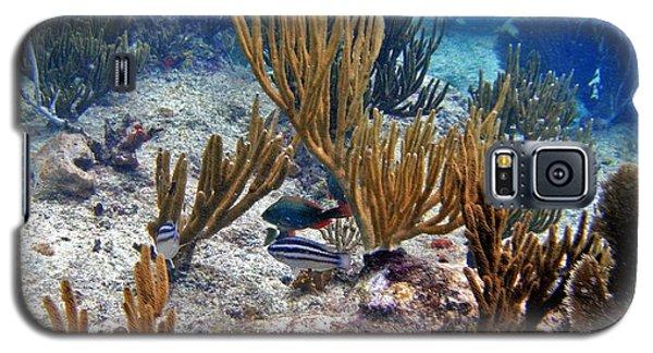 Gorgonian Parrotfish Galaxy S5 Case