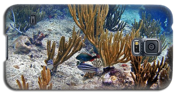 Gorgonian Parrotfish Galaxy S5 Case