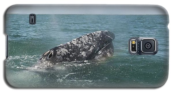 Gray Whale In Bahia Magdalena Galaxy S5 Case