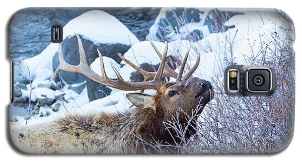 Grazing Elk Galaxy S5 Case