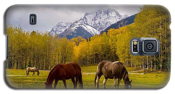 Grazing In Aspen Galaxy S5 Case