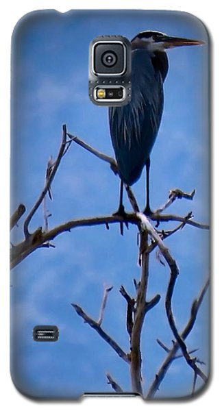 Great Blue Heron 3 Galaxy S5 Case