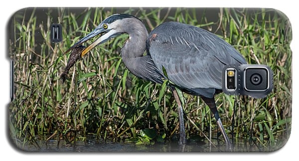 Great Blue Heron With Fish Galaxy S5 Case