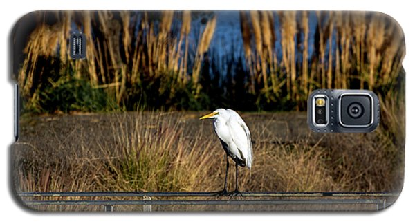 Great Egret Posing By Golden Pampas Grass Galaxy S5 Case