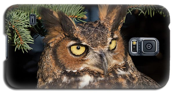Great Horned Owl 10181802 Galaxy S5 Case