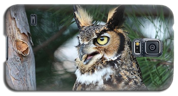 Great Horned Owl 5151801 Galaxy S5 Case