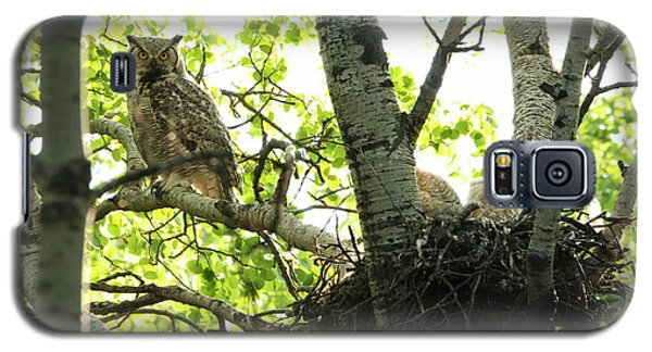 Great Horned Owl And Babies Galaxy S5 Case