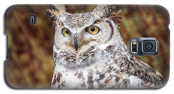 Great Horned Owl Portrait Galaxy S5 Case