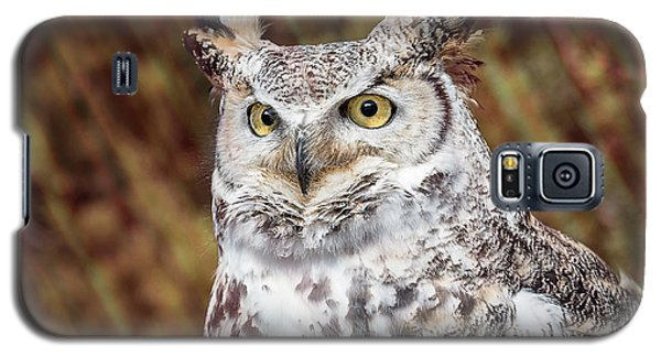 Great Horned Owl Portrait Galaxy S5 Case