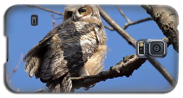 Great Horned Owlet 42915 Galaxy S5 Case