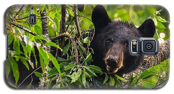 Great Smoky Mountains Bear - Black Bear Galaxy S5 Case
